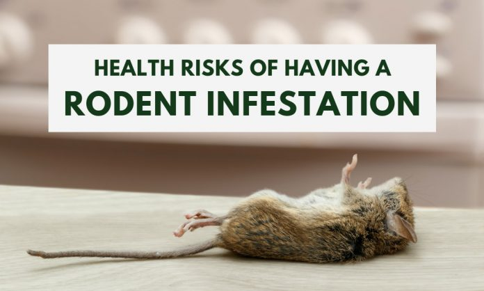 Health Risks of Rodent Infestations