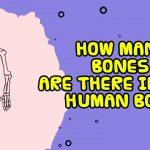 how many bones are there in the human body