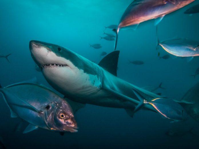 do sharks have bones